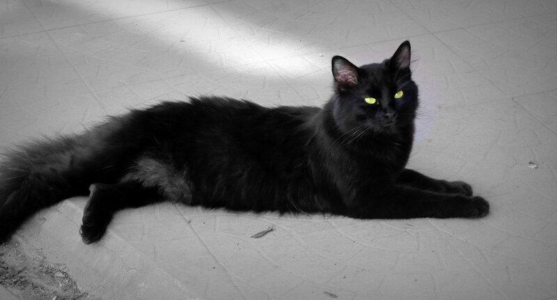 Кошки Одессы