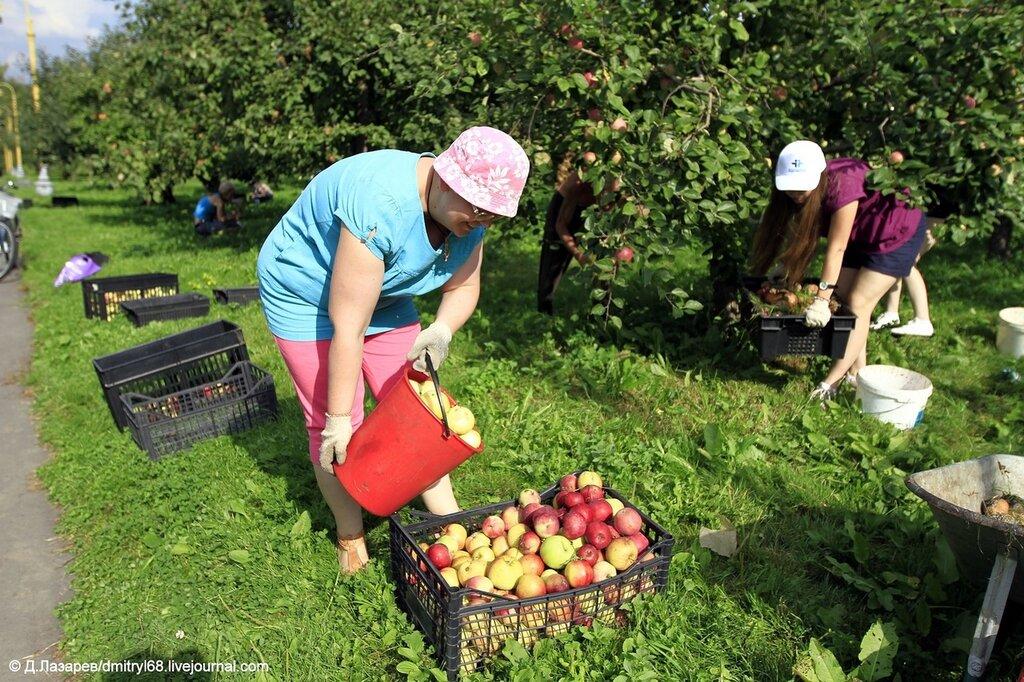 фото уборка урожая на руси