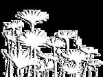 fleurettes.png