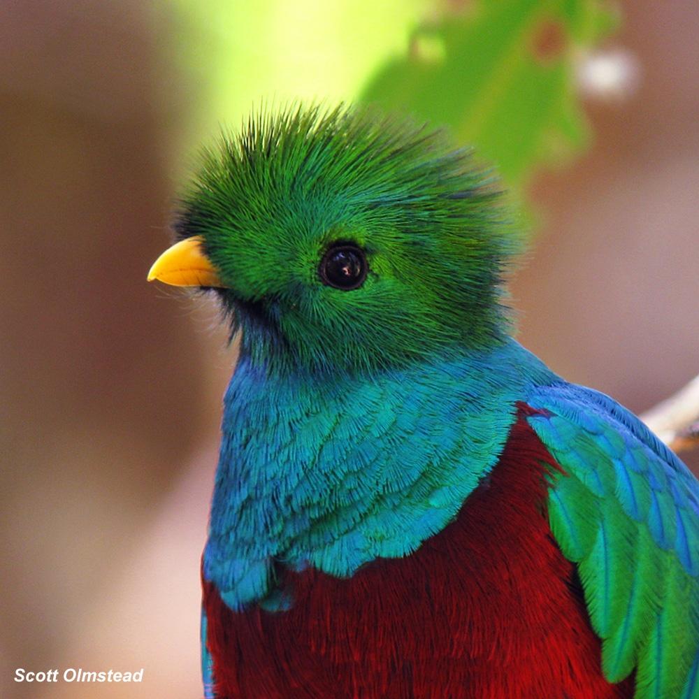 Птица свободы на грани вымирания