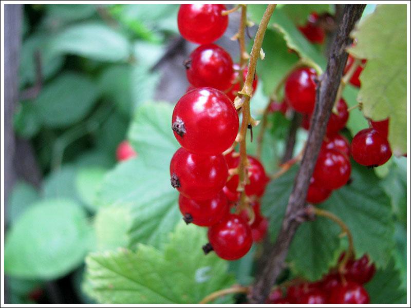 летние ягоды 4