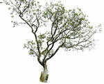 tree_2_psd_by_gd08-d2xjibs.jpg