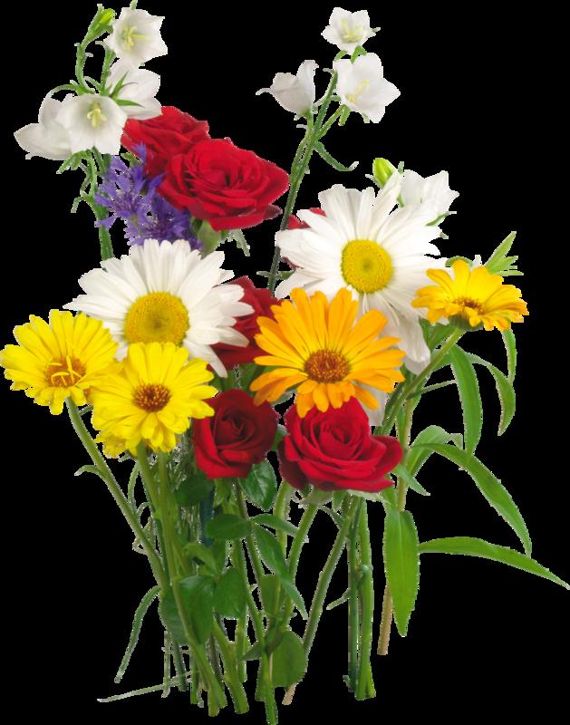 Полевые цветы картинки на прозрачном фоне