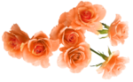 Butterfly Bouquet (35).png