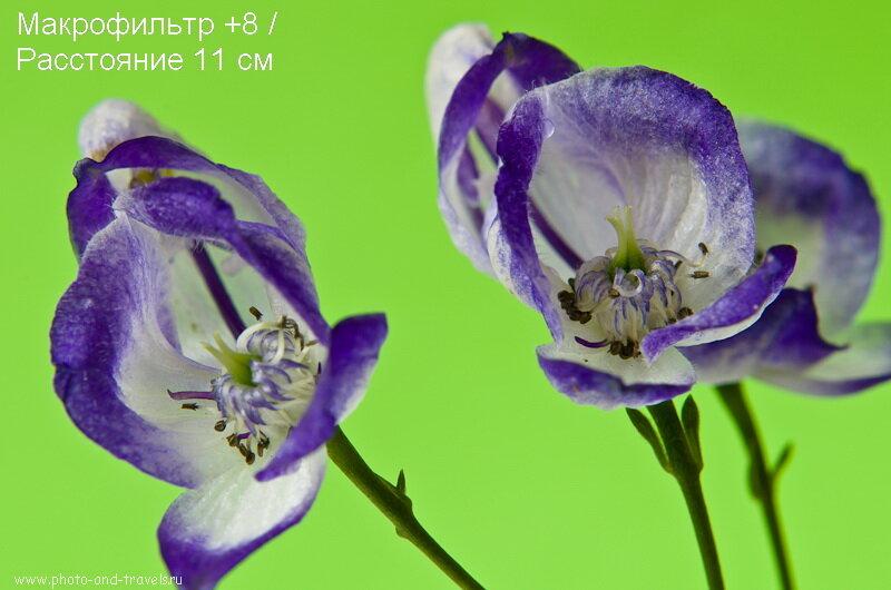 Фотография 7. Обзор набора Close Up. Макрофильтр +8 не может сфокусироваться с 17 см
