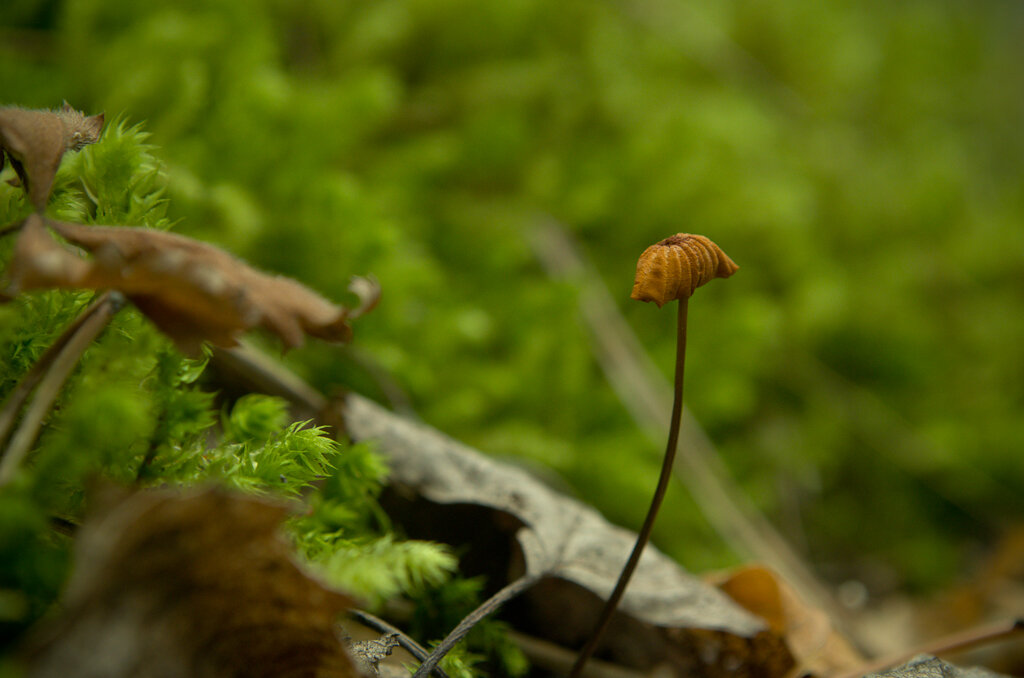 Снимок 11. Пример макрофото, снятого на Nikon KIT 18-55 + макролинза +4. Тушка - Nikon D5100 body