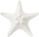 RR_SeasideRomance_Element (12).png