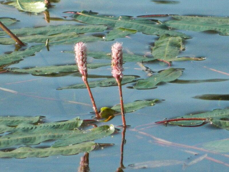 Озеро Бараус. Год 2013