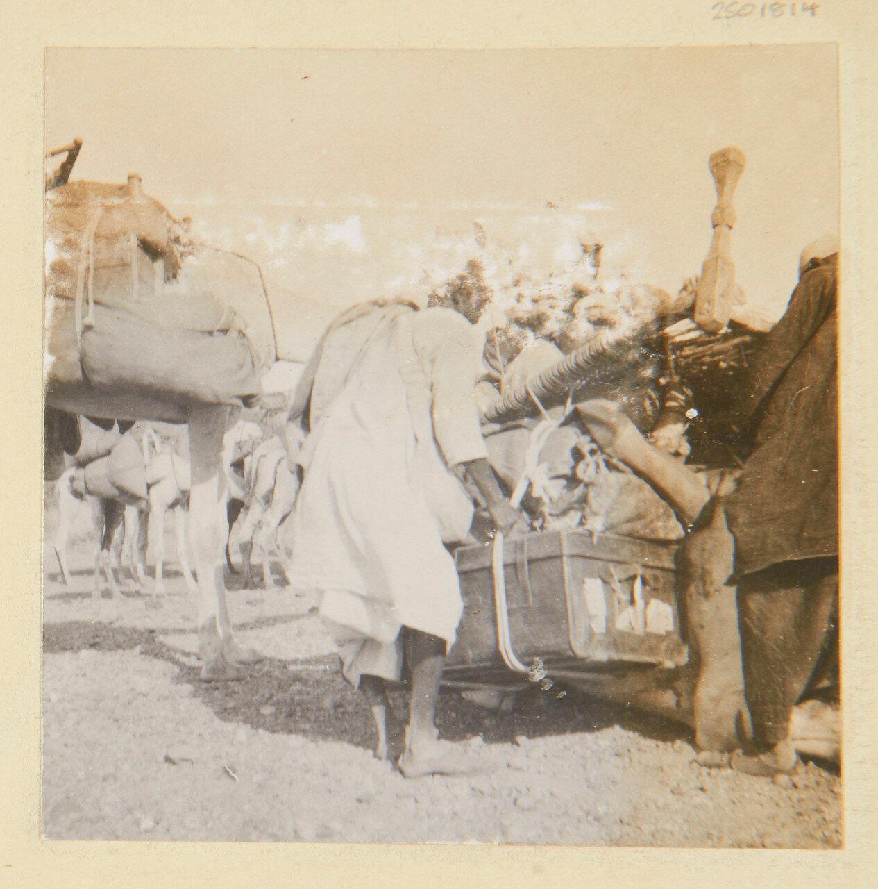25-31 августа 1898. Сборы