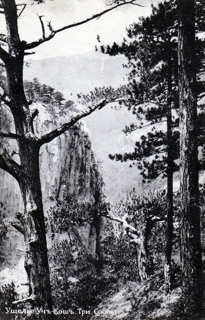 Ущелье Уч-Кош. Три сосны