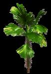 R11 - Palms - 2013 - 3 - 024.png
