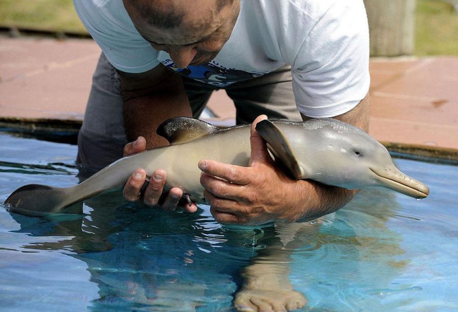 объявления квартирам к чему сниться спасение дельфинов приготовить сметанный крем