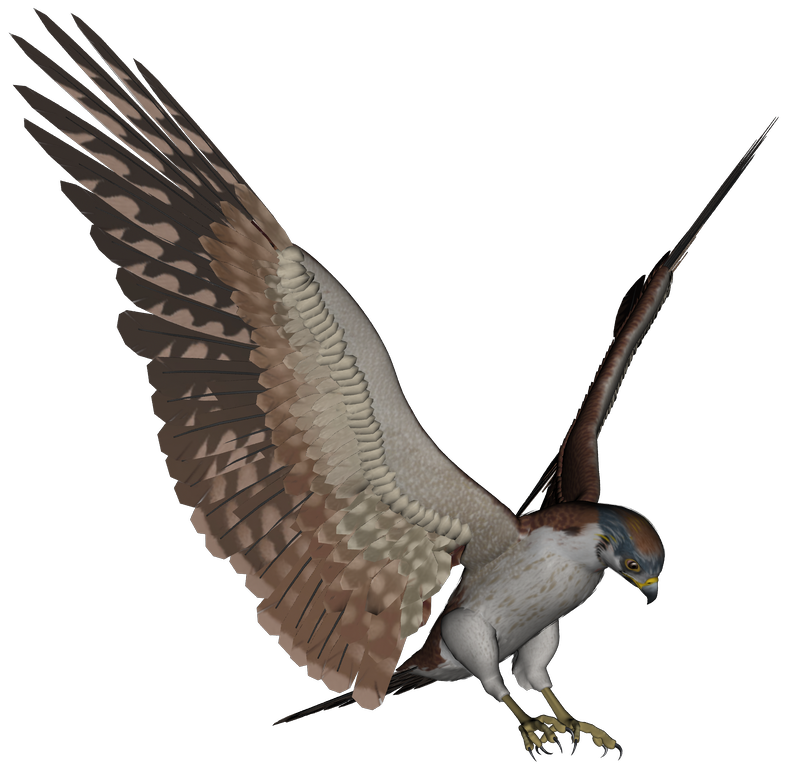 Фото птицы на прозрачном фоне анимация