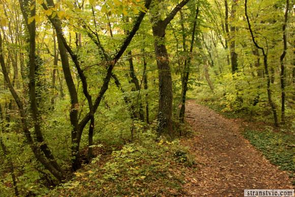 лес вокруг монастыря в скале