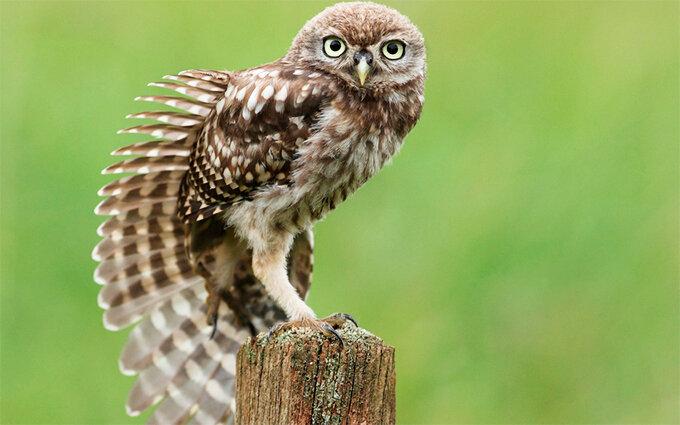 22 Фото «Милая мудрая сова!»