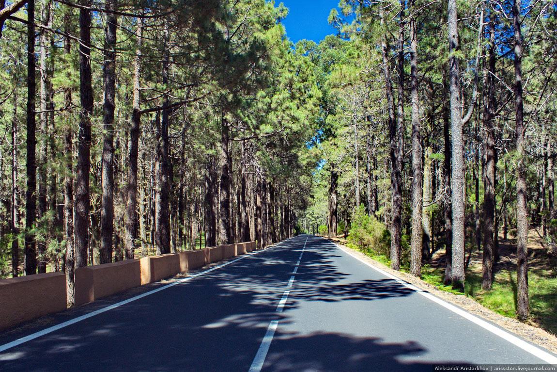 Путешествие по Тенерифе: День 5: Тенерифе - это прежде всего лес