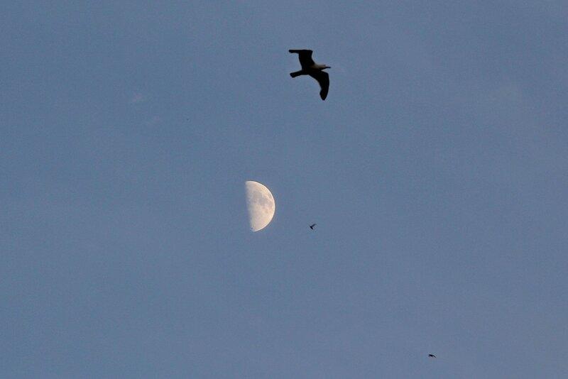 Луна и силуэты птиц