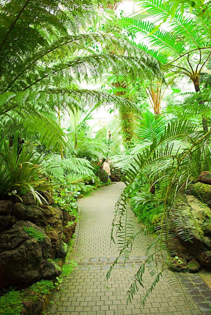 Джунгли в ботаническом саду Palmengarten во Франкфурте. Что посмотреть за полдня.