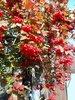 Калина, краски Осени