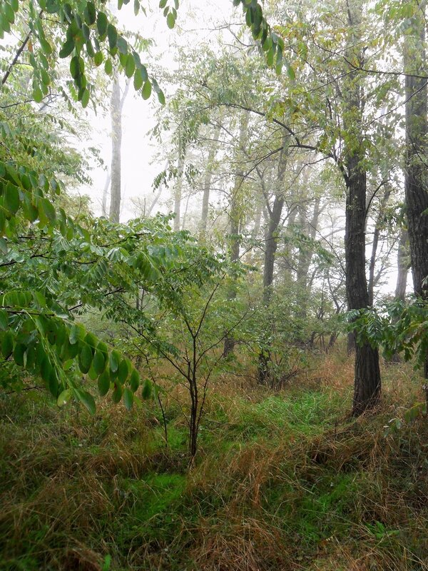 В тумане, октябрь