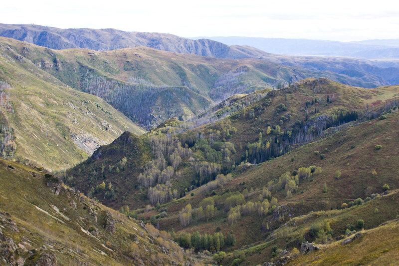 урочище Пихтовая яма, Нарымский хребет, вид с горы Колпаккарагай