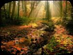 anna.br_lumiКres-d'automne_17-09-10.png