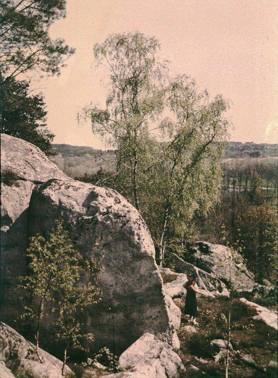 Лес де Немур