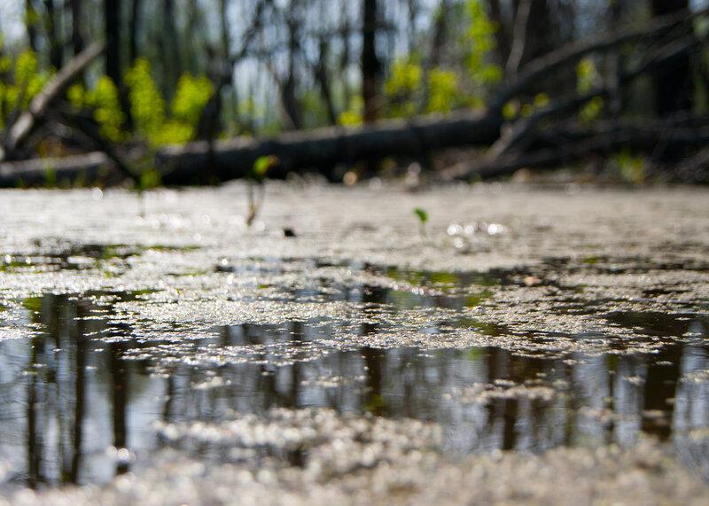 весеннее болото