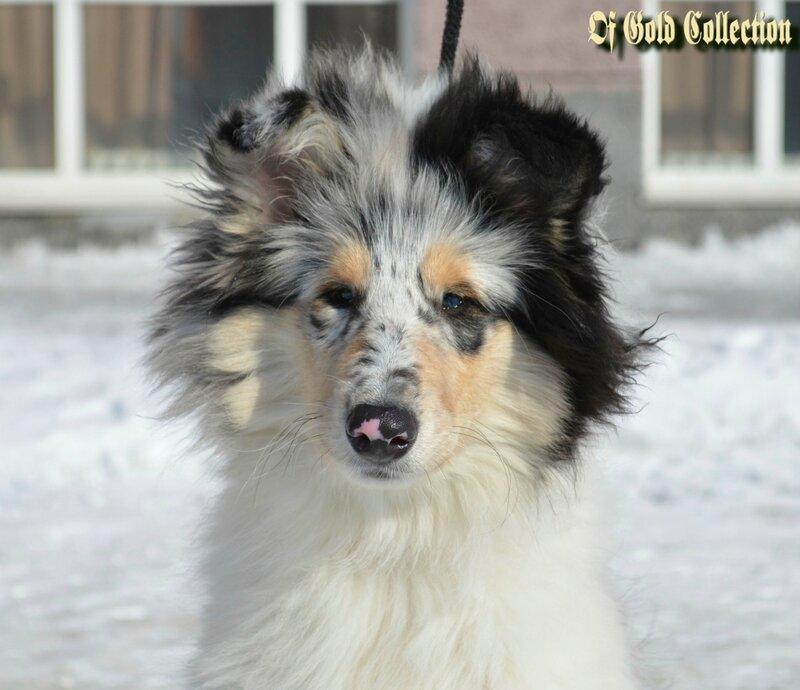http://img-fotki.yandex.ru/get/9485/134559744.1b/0_bee73_c3847771_XL.jpg