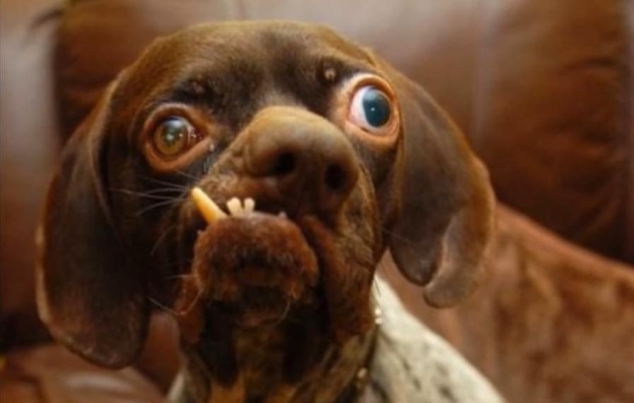 уродливый пес