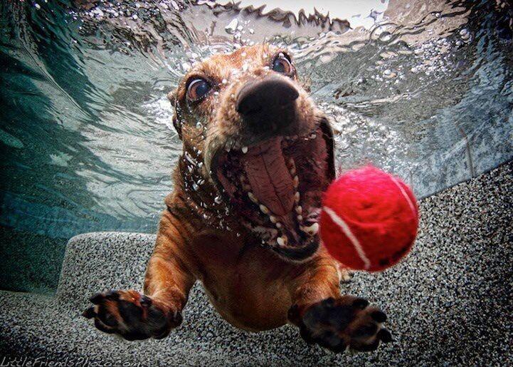 куче гони топка