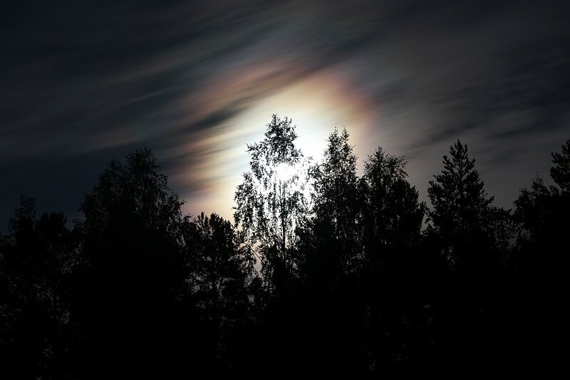 Цветное гало вокруг яркой полной луны во время суперлуния, спрятавшейся за деревьями