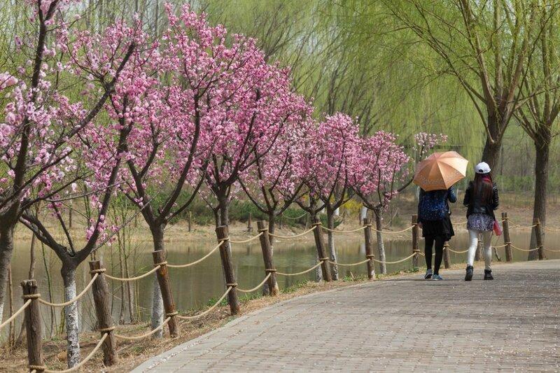Весна, Олимпийский парк, Пекин