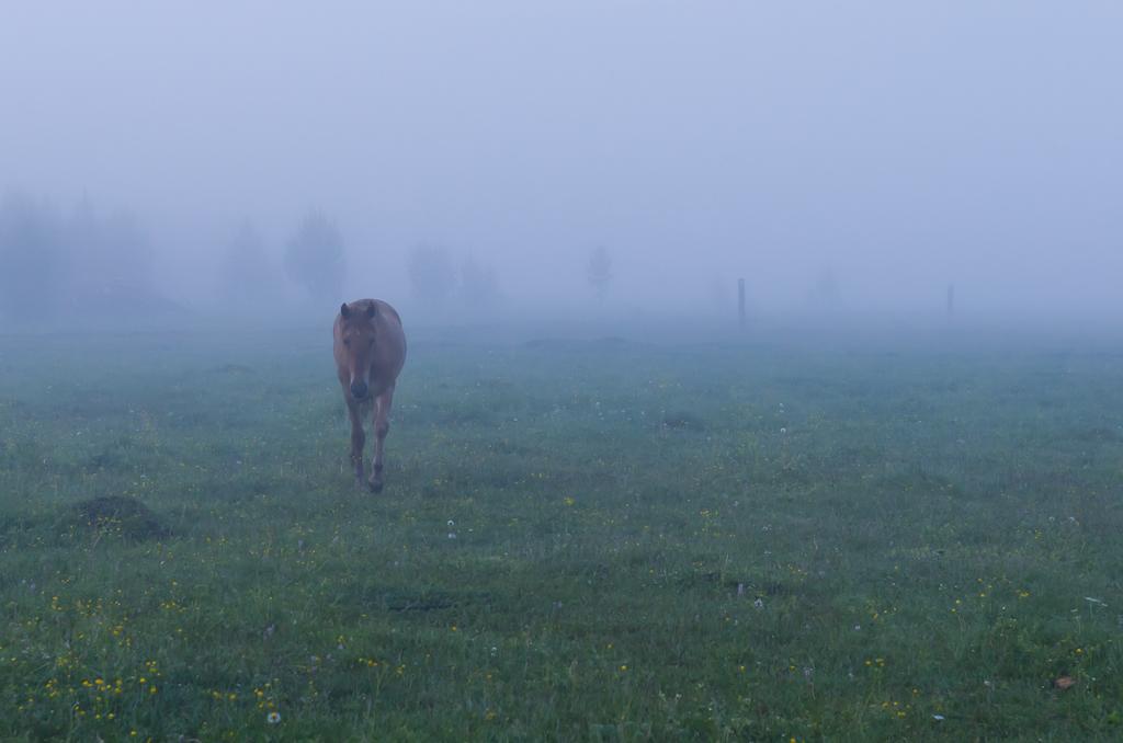 14. Отдых в горах Башкирии. База Малиновка. Грустная лошадь в тумане