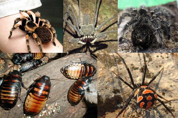 Выставка ЖИВЫХ тропических насекомых