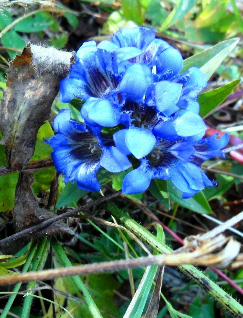 Цветы у тропы ... SAM_3360 - 1.JPG