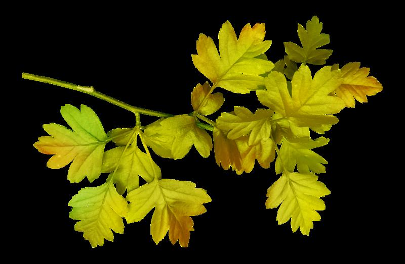foliage-05-21.png