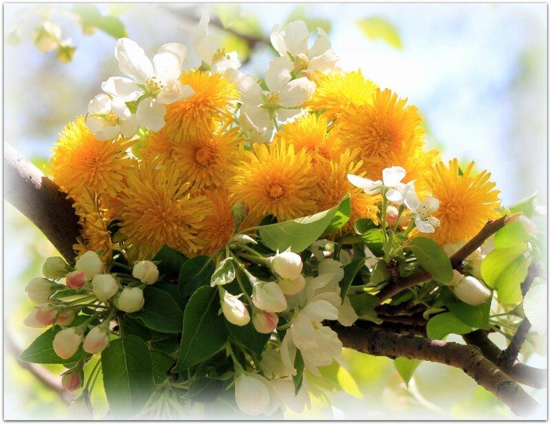 хорошие цветы с прекрасным пожеланиемдоброго дня нем