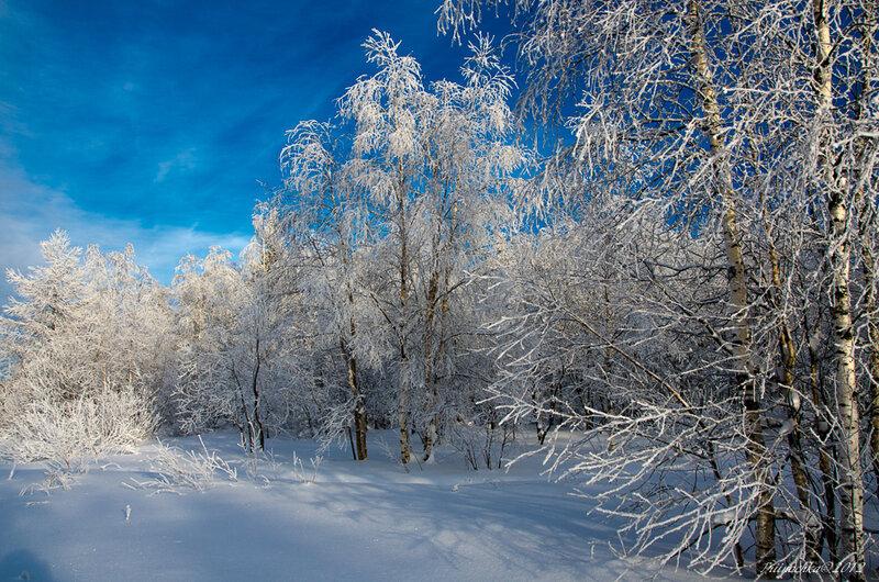 Ах, зимний лес!...Пушистый иней лег, серебрясь, в ветвях берез