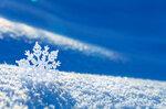 Snowflakes (2).jpg