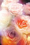 Roses mix (1).jpg