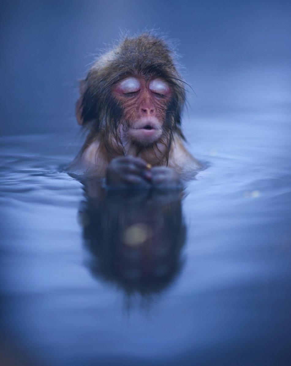 Год воды и обезьяны