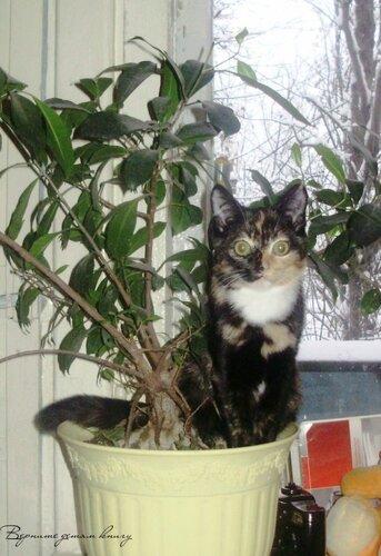 Кошка Милаша