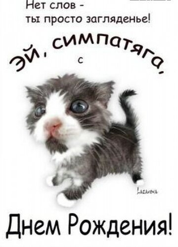 Поздравления с днём рождения котики фото 67