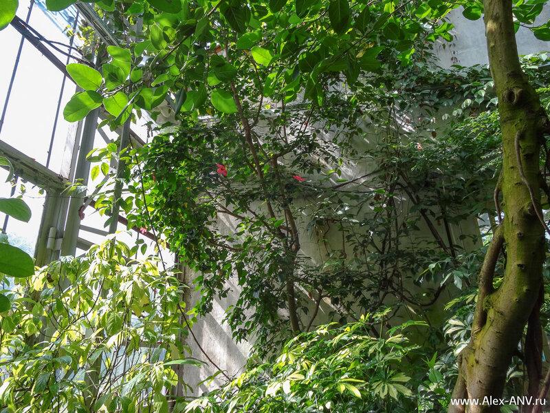 Завершает маршрут оранжереи с декоративными и полезными растениями.
