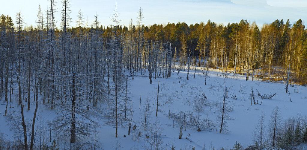 Фото 1. Куда уходят ёлки после новогодних праздников. Лес недалеко от поворота на город Качканар. Съемка на камеру Nikon D5100 с объективом Nikon 17-55mm f/2.8G.