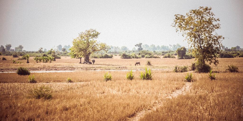 Камбоджа. Дорога к Сиемрипу и его окрестности