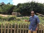 mrkesavarajTaronga Zoo, Sydney, Oz сивая зебра бояндин.jpg