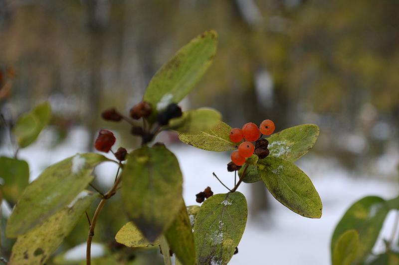 осень под снегом 5