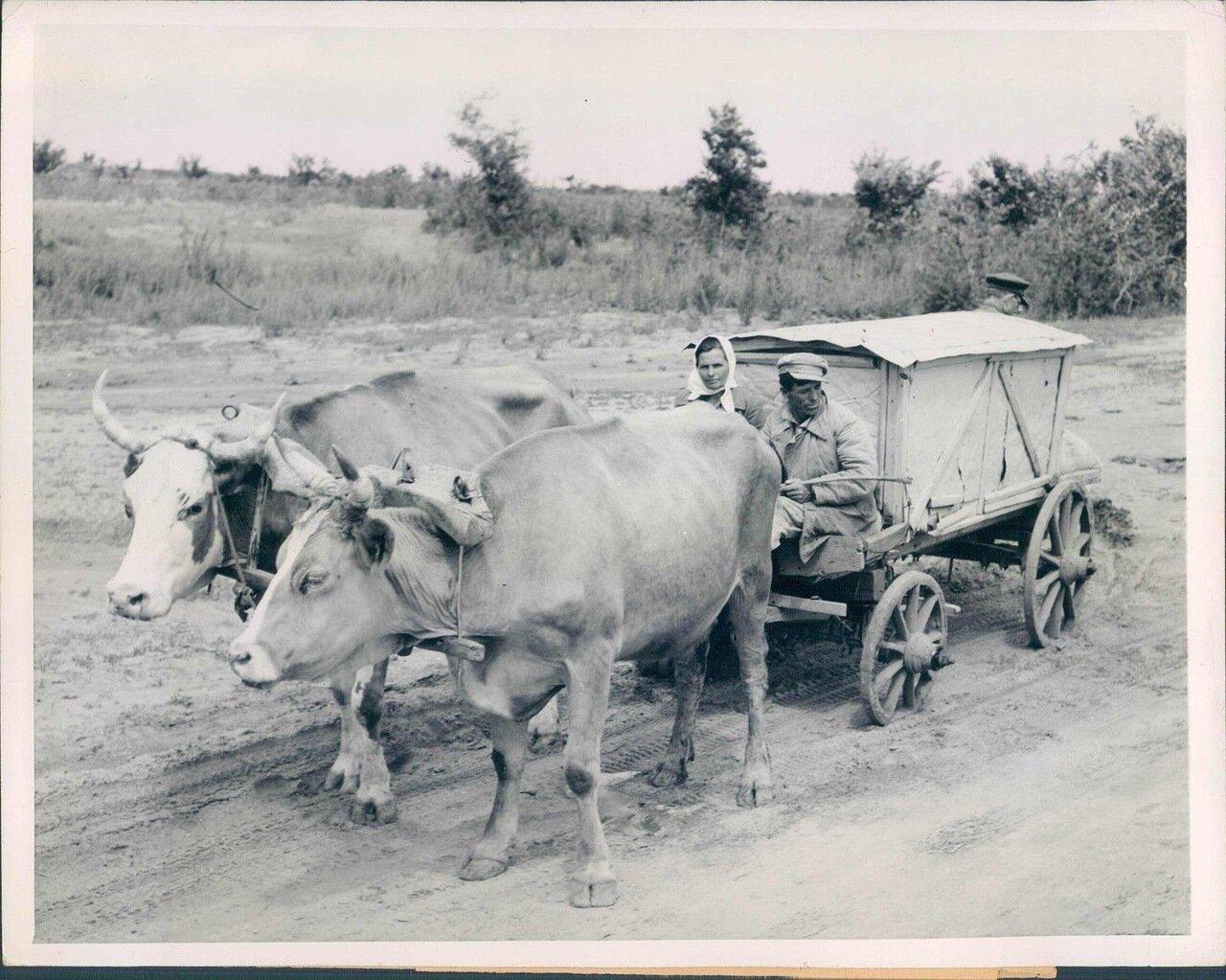 1946. Доставка хлеба в деревню
